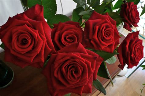 deliver flowers on valentines day for the best valentines flowers in the cotswolds come to
