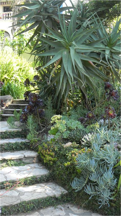 always love succulents stairs makes you feel your going underwater succulent garden los