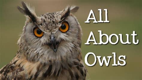 backyard owls all about owls backyard bird series freeschool