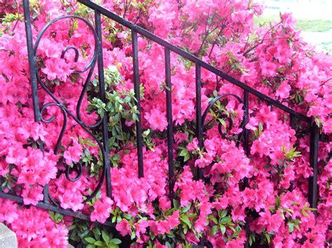 01 Azelia Syari floral friday fotos morning has broken a visit with