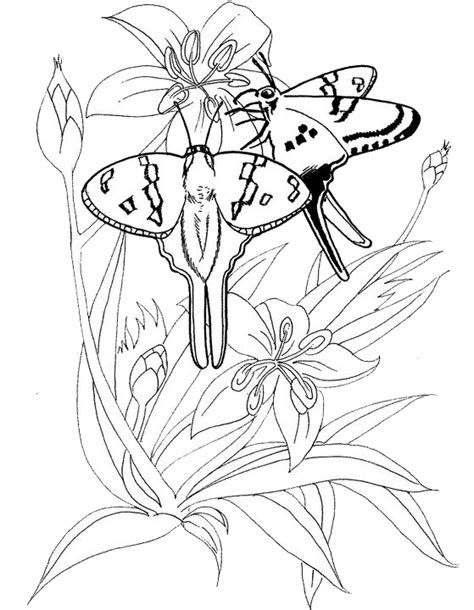 arthropod coloring page arthropods coloring pages coloring pages