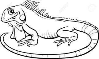 iguana coloring page best iguana clipart 14000 clipartion