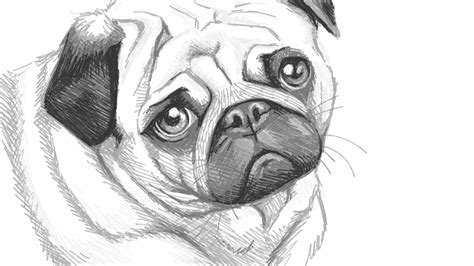 simple pug drawing pug doodle ly
