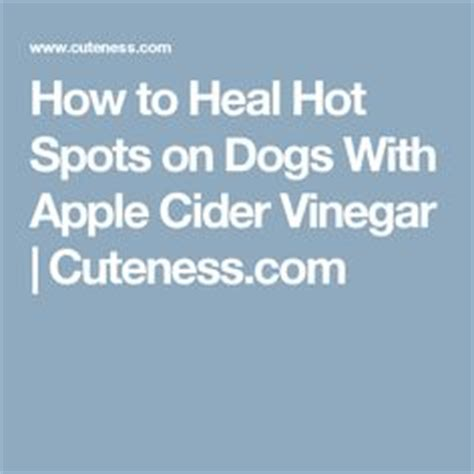 Home Remedies For Hotspots On Dogs by 1000 Ideas About Spots On For Dogs