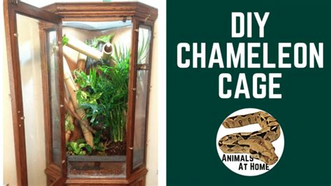 diy reptile projects   guide animals  home