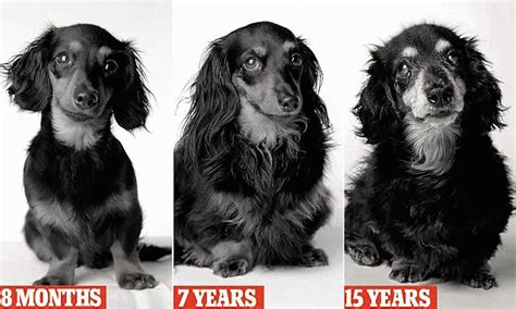 puppy years according to science 1 year does not actually equal 7 human years the 7 year
