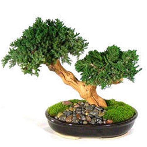 Herb Indoor Planter by Bonsai Plants Bonsai Plants Manufacturer Supplier