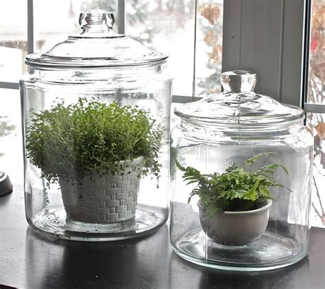Walmart Winter Garden by A Paisley Day Walmart Glass Jars Become Terrariums