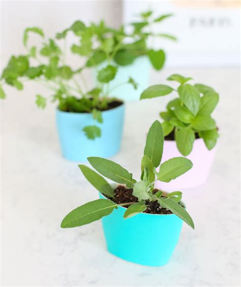 custom potted hanging herb garden diy fresh mommy blog fresh mommy blog 14 diy planters for growing herbs indoors garden pics