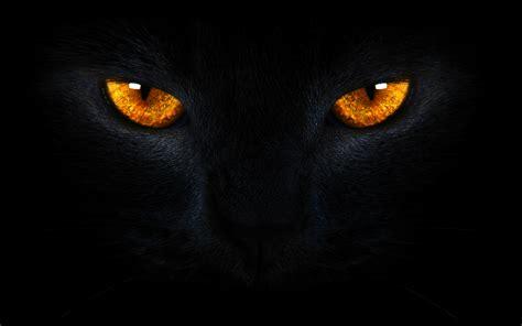 gold eye wallpaper black cat eyes wallpaper wallpapersafari
