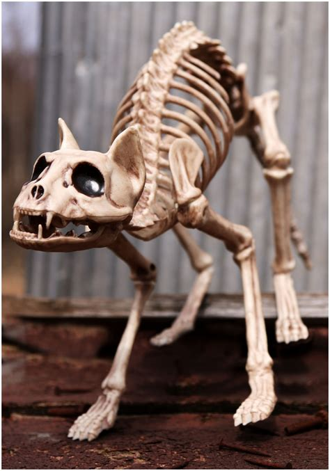 skeleton decoration ideas indoor outdoor skeleton decorations ideas