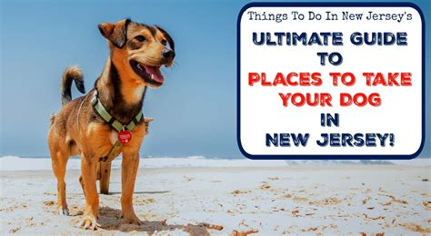 puppy finder nj the ultimate guide to places to take your in new jersey things to do in new jersey