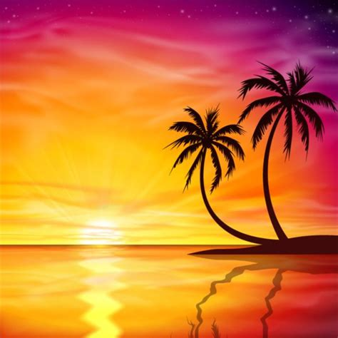 sunset vectors photos and psd files free download beautiful sunset with palm trees background vector