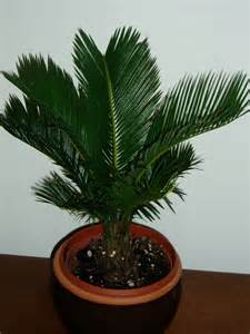 house plant types palm type house plants palm was to the tropics
