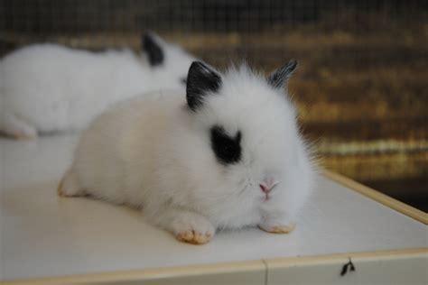 coniglio da appartamento foto di cuccioli di conigli appena nati