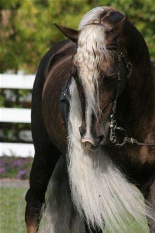 Tas Palomino Original Ramona Grey the mare and the stallion ironthronerp