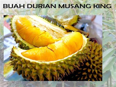 pembibitan durian musang king magelang