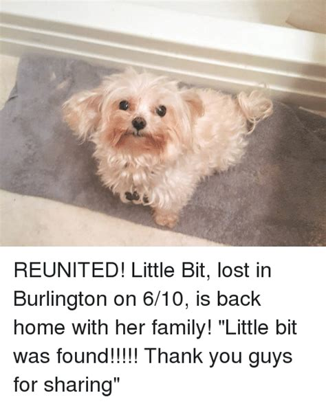 how to put her back in a bit with a bandana reunited little bit lost in burlington on 610 is back