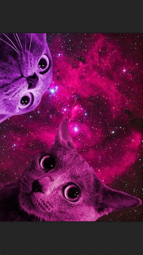 wallpaper galaxy cat space cats just simply amazing pinterest space