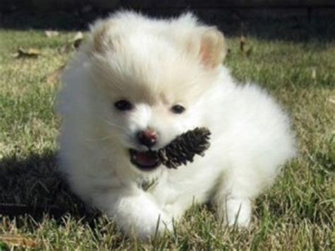free puppies in des moines iowa dogs des moines ia free classified ads