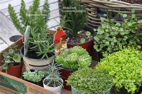 how to make a miniature fairy garden in a container hgtv