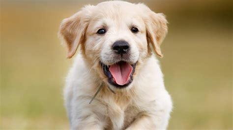 imagenes abstractas de un perro nace un perro verde