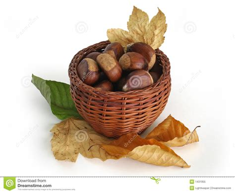 clipart castagne castagne in un cestino con i fogli di autunno fotografia