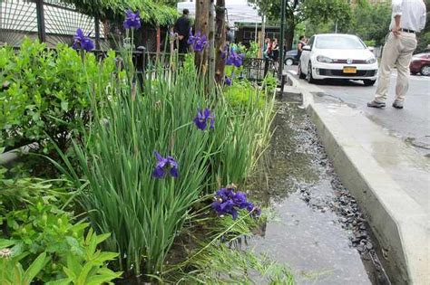 nyc plants hundreds  curbside gardens  soak  storm
