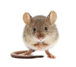 new compound treats blindness and diabetes in mice holds