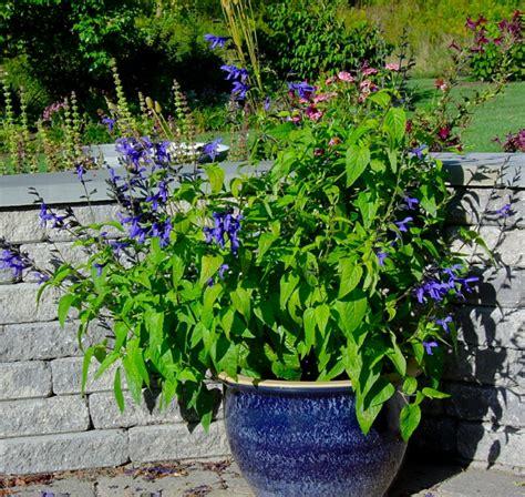 schöne pflegeleichte gartenpflanzen pflegeleichte g 228 rten profitieren aus dem zauber