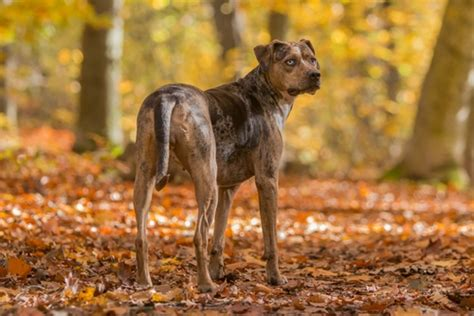 best dogs to run with 10 best dogs to run with breeds that to run