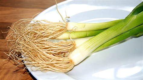 piantare cipolle in vaso ortaggi frutta e verdura da coltivare in casa in vaso sul
