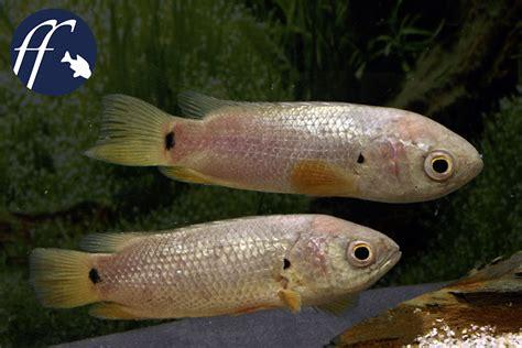 warum haben fische schuppen warum gingen die fische an land teil 2 aqualog de