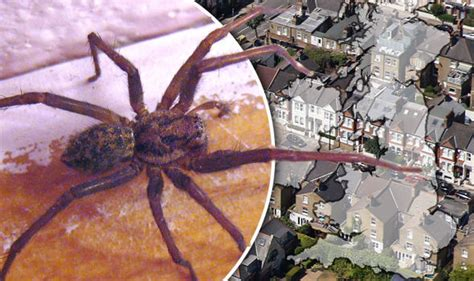 giant house spider seattle giant house spider house plan 2017