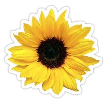 Brown Flower Wall Sticker Transparant quot sunflower flower floral yellow brown quot stickers by