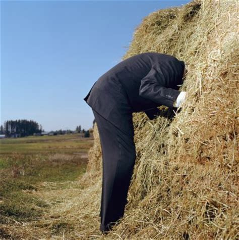 Find Looking For A Like Looking For A Needle In A Haystack Evil