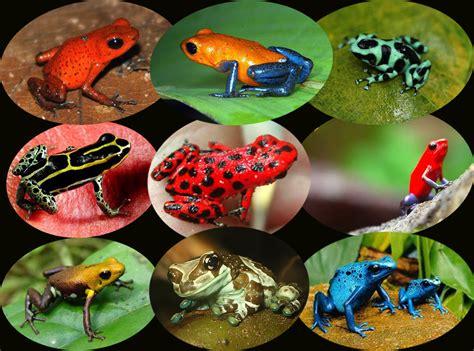 mengenal hewan penghuni sungai amazon daerah carapedia
