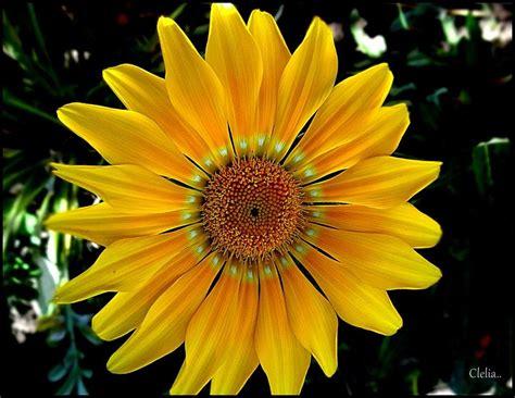imagenes de rosas y flores fotos de flores plantas y frutos youtube
