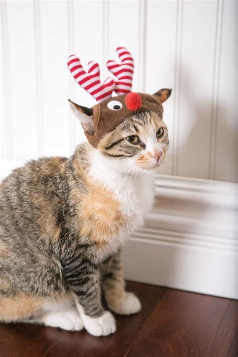 Petsmart Cottage by 1000 Ideas About Cat Costumes On Cat