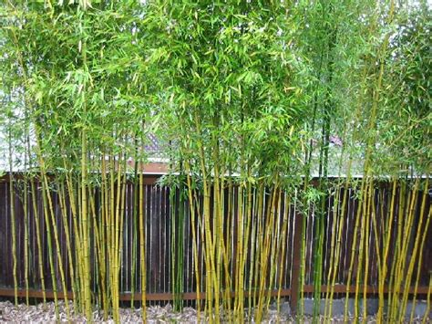 Backyard Bamboo Garden by Indi Scaping Design Small Yard Landscaping Ideas