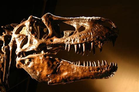 6 places to find dinosaurs in colorado outthere colorado