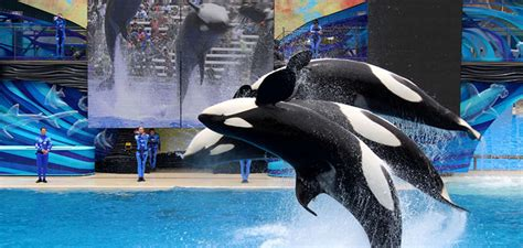 Detox By Seaworld by California Bans Killer Whales And Seaworld Shows