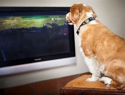 puppy tv should your be tv the new york times