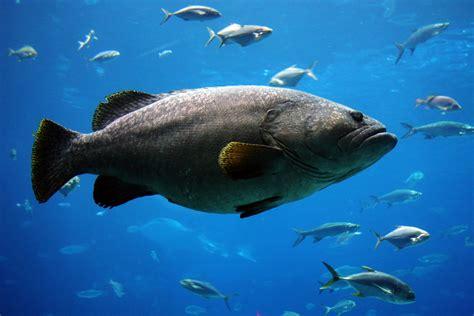 bid fish the big fish and the big moon