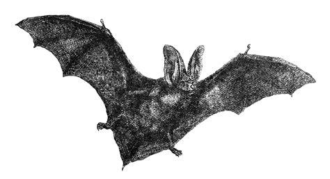 bat tattoo png pin bat flying on spooky tree tattoo on pinterest