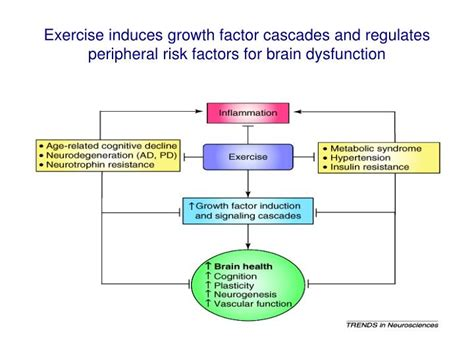 inductance exercise ppt growth factor gf cascades and exercise and the regulation of cognition mood and motor