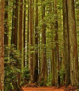 33 most beautiful places in america beautiful places national forest and northern california