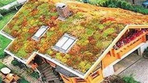 giardino sul tetto di casa un giardino sul tetto di casa