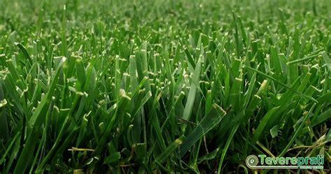 giardini ornamentali prato a rotoli tevere tappeto erboso per giardini ornamentali