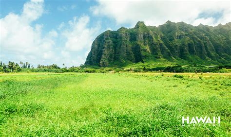 hawaii zoom backgrounds    feel